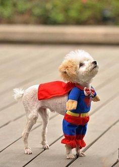 Superdoggggg