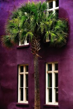 Aubergine looks great mixed with natural green tones. Aubergine home decor l Aubergine decor ideas l Aubergine bedroom inspiration Shades Of Purple, Green And Purple, Plum Purple, Purple Accents, Green Cream, Murs Violets, Charleston Style, Foto Art, All Things Purple
