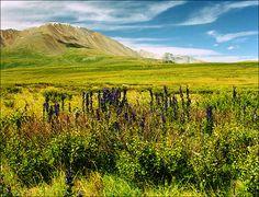 Altay Republic nature