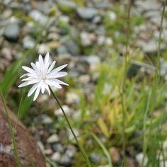 norge | tromsø | botanisk hage