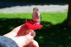 (*AWESOME!*)HUMfi Miniature Window to Hand Hummingbird by PlantWhisperer, $14.99