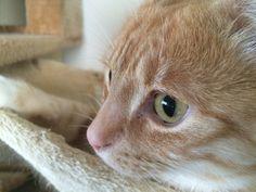 #Katzenaugen sind besonders spannend. Ständig verändern sie ihre Form. Warum können #Katzen denn eigentlich auch nachts sehen?