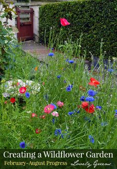 how to create a wildflower garden vibrant with color and buzzing with bees and butterflies