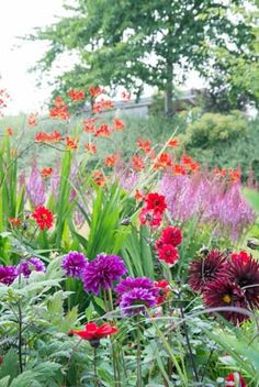 Great Companion Plants for Your Crocosmia (bishop of lanoff dahlia, astilbe, lucifer crocosima)