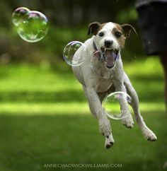 Flying dog   ...........click here to find out more     http://googydog.com