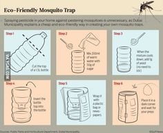 A mosquito trap