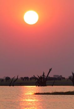 Chobe National Park in Botswana, sunset game drive... www.africantravel.com #africantravel #botswana #chobesafari Chobe National Park, National Parks, Game Reserve, Travel Destinations, Southern, Around The Worlds, African, Sunset, Pictures