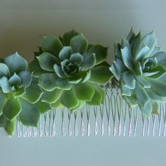 This succulent hair comb measures 4.5 inches long. It is made with tree echeverias It may be created with bright green, purple or blue succulents. It may also be created with three different succulents.  Custom options available, please contact me.