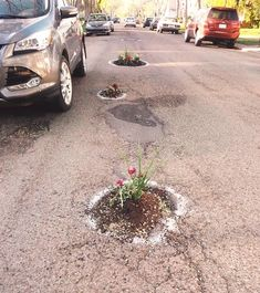 Fed up with the state of their cities' streets, many people have opted to beautify the roads with flowers.