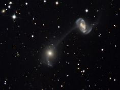 7/31/2008: Galaxies on a String -  NGC 5216 (top right) and NGC 5218. The string between the two galaxies is a cosmic trail of gas, dust and stars about 22,000 ly long. The debris trail between the galaxies, along with NGC 5218's comma-shaped extension and the distorted arms of NGC 5216 are a consequence of mutual gravitational tides that disrupt the galaxies as they repeatedly swing close to one another. The galaxies are located about 17 million ly away in the constellation Ursa Major.