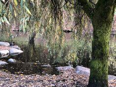 Free running after sun run Walking Club, Queen Elizabeth Park, Duck Pond, After Sun, Running, Plants, Keep Running, Why I Run, Plant