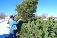 Reno News & Review - Trees' company - News Pic - Local Stories - January 3, 2013