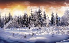 nature winter snow dreaming fence snow widescreen hd wallpaper