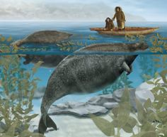 Recently extinct animals: Steller's Sea Cow Steller's sea cow is one of the few very large mammal species to have died out during the recent historical period. This species was also the only sirenian. Prehistoric World, Prehistoric Creatures, Cow Pictures, Animal Pictures, Steller's Sea Cow, Extinct Animals, Sea Creatures, Animals Beautiful, Mammals