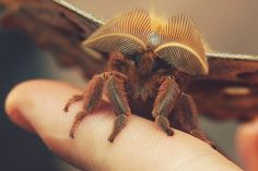 Enormous moth, photo by my husband.