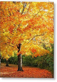 Tree In Mingo Park Greeting Card by Brian Mollenkopf