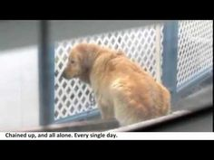 Town Refuses To Help The Poor Dog Next Door, So They Decide To Jump The Fence Themselves - YouTube