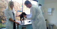Iniciativa do bem em São Carlos/SP 'Gratificante', afirma veterinário sobre dar consultas gratuitas aos sábados!