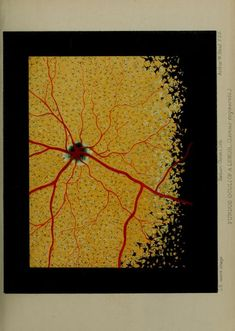Fundus oculi of a lemur, Proceedings of the Zoological Society of London, 1897.