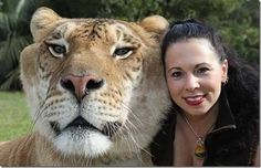 Hercules the liger 408 kg Half tigeress and half lion   It is the largest of all known extant felines
