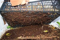 Com separar les furgues de l'humus Container Vegetables, Container Gardening, Gardening Tips, Faire Son Compost, Homestead Gardens, Garden Compost, Worm Farm, Worm Composting, Fruit Garden