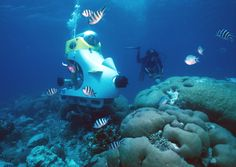 Sharkiest Scooter: Blue Safari in Mauritius Scooter Sous Marin, Adventure Days Out, Sea Activities, Kayak Adventures, Outdoor Adventures, Sports Nautiques, Excursion, Jungle Safari, Maurice