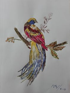 ave del paraiso 1