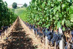 Weinreisen durch Bordeaux - Frankreich