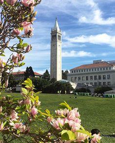 Berkeley Campus, San Francisco Ferry, Grateful, Future, Building, Places, Travel, Life, Instagram