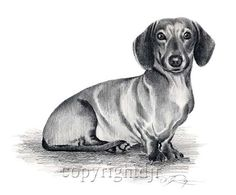 dachshund pencil drawings - Buscar con Google