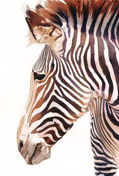 """""""Zebra Bust"""" Zebra Wildlife Watercolor by Paul Jackson"""