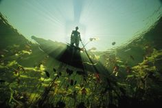 Bushman, Botswana Photograph by David Doubilet, National Geographic Sunlight and shadows highlight a river Bushman in a canoe in the Okavango River. When the river swells and floods, it creates an. Under The Water, Under The Sea, National Geographic Society, National Geographic Photos, Underwater Images, Underwater Photographer, All Nature, Cultural, Belle Photo