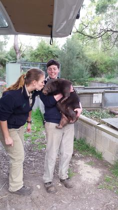 Keepers Amie and Julie say their final goodbyes to favourite Tinsel before she heads off to Germany to live at Zoo Duisberg (Tinsel's move  was featured in the Herald Sun last Sunday)