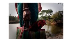 sunderbans, west of bengal - mornings
