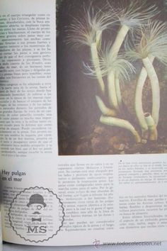 Libros de segunda mano: Libro Naturalia. Enciclopedia Ecológica Ciencias Naturales. Vol II. El Mar y Su Fauna - Codex, 1965 - Foto 4 - 50515282