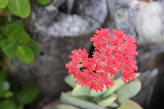Succulents 6 by Charissa Lotter (de Scande) by Charissa Lotter (de Scande) on 500px