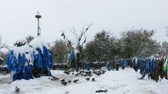 Discover The Mother Tree in Shammar, Mongolia: This spiritual landmark for practicers of Shamanism is drenched in milk and vodka and covered in blue scarves. Blue Scarves, Lightning Strikes, Mongolia, Buddhism, Two By Two, Asia, Spirituality, Random Items, Shamanism