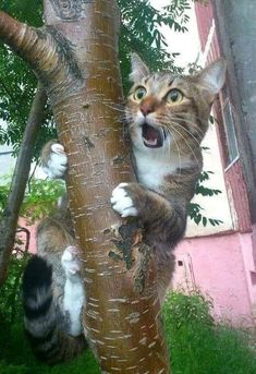 Silly Cats, Cute Cats And Kittens, Baby Cats, Cool Cats, Kittens Cutest, Funny Cats, Funny Animal Memes, Funny Animal Videos, Cute Funny Animals