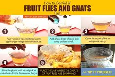 apple cider vinegar to get rid of fruit flies and gnats Fruit Flies In House, How To Get Rid Of Gnats, Flies Outside, Get Rid Of Flies, Top 10 Home Remedies, Essential Oils For Headaches, Apple Cider Vinegar, Good To Know, Bugs