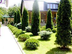 Декоративные растения на садовом участке. Туя, как правильно выбрать, посадка и уход