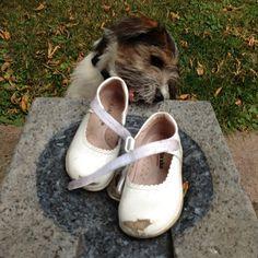 heididahlsveen:  Hvem får føttene sine ned i disse sko? #atsjoo #valp #hund