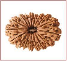 Buy original 17 Mukhi Rudraksha, price of 17 Mukhi Rudraksha, benefits of 17 Mukhi Rudraksha, 17 Mukhi Rudraksha in Delhi India