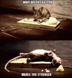 One tough mouse  funny tumblr follow LOLFACTORY on tumblr[this...