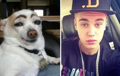 celebrities-and-their-animals-look-a-likes-18