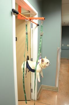 Pet vest support system medium support sling httpthepuppy a restraining device that fits in a door frame to keep a dog immobile and cooperative solutioingenieria Image collections
