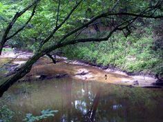 little cypress pond off of hwy 10 in vernon parish great place for a rh pinterest com