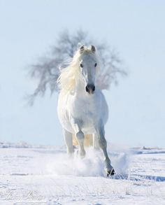 """Horse Photography """"Snow Stallion and the Tree"""" Horse Wall Art Snow Andalusian Stallion White Horse Print Winter Home Decor All The Pretty Horses, Beautiful Horses, Animals Beautiful, Horses In Snow, White Horses, Animals And Pets, Cute Animals, Horse Wall Art, Andalusian Horse"""