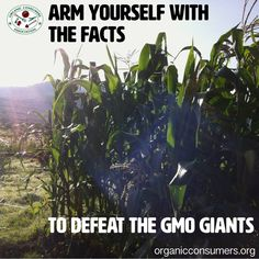 Knowledge is power! The more we know about GMOs, the less vulnerable we are to Big Ag and corporate deception. Learn more and spread the knowledge: http://orgcns.org/1wcthI4  #GMO #LabelGMOs #RightToKnow #GMOs #Organic #Health