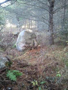 """Treasure hunt....""""The stone face will see your path..."""""""