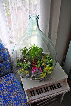 63 Best Bottle Terrarium Images Bottle Terrarium Indoor Plants